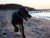 xavras-czyli-super-pies