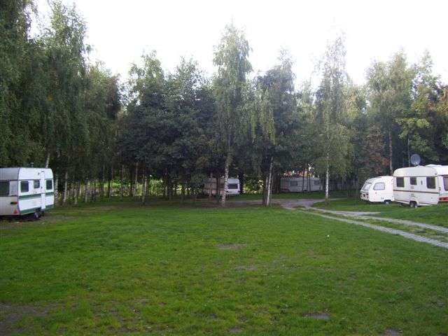 camping pod brzozami