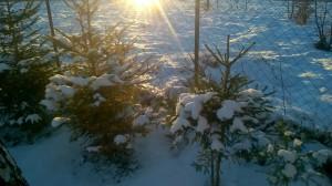 zima5