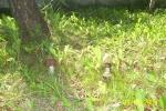 grzybobranie