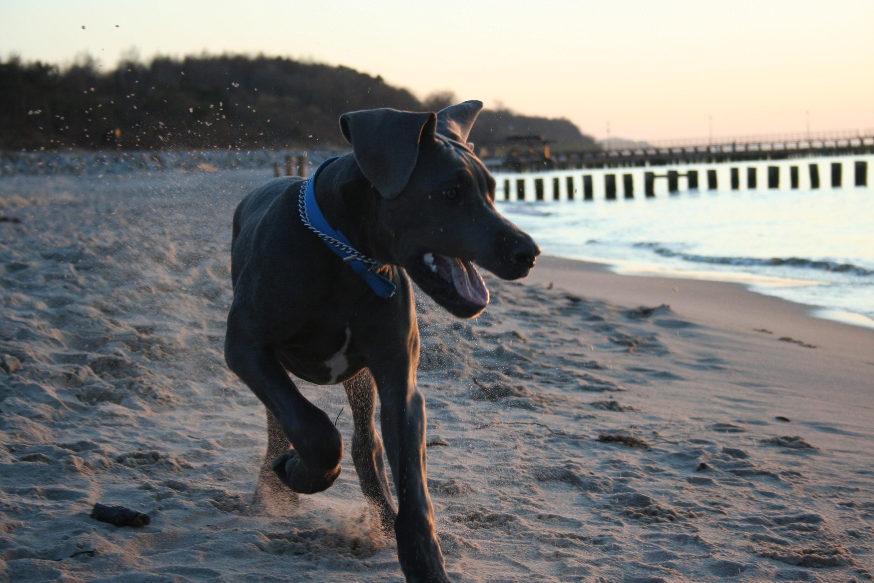 pies w ustroniu morskim